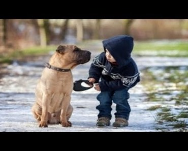 Funny Babies Walking Dogs Compilation! - funny babies walking dogs compilation