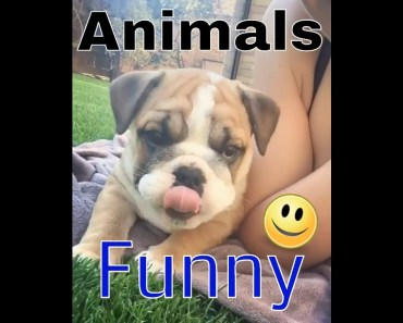 Funny Cute Animals Compilation Funny Dogs Horse - funny cute animals compilation funny dogs horse