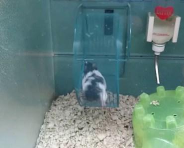 Funny Hamster Running On wheel At PetsSuppliesPlus - funny hamster running on wheel at petssuppliesplus