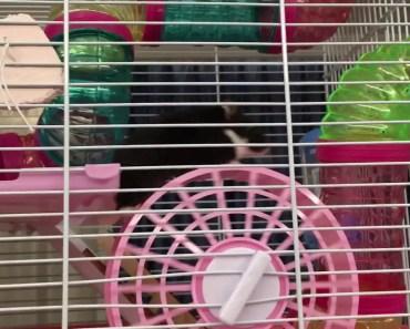 Funny hamster wheel - funny hamster wheel