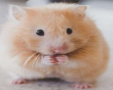 Funny Hamsters - Fail Hamster Compilation - funny hamsters fail hamster compilation