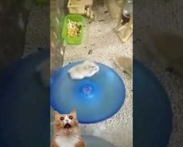 Funny Hamsters on wheel - funny hamsters on wheel