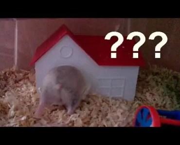 Hamster Acting Weird.... - hamster acting weird