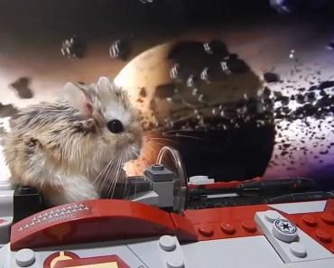 Hamster Cosmonaut - hamster cosmonaut