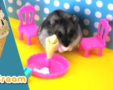 Hamster Eat Ice Cream Wonderful | Relax Your Mind ASMR | HAMSTER KITCHEN - hamster eat ice cream wonderful relax your mind asmr hamster kitchen