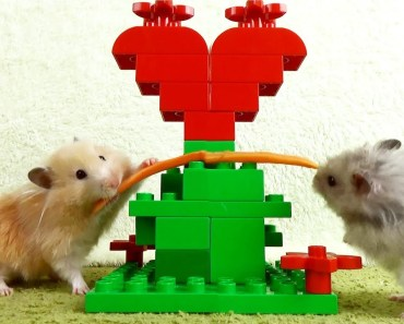 Hamster in the Lego Fairy Forest - hamster in the lego fairy forest
