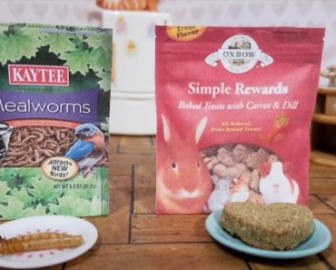 Hamster Picks His Favorite Treat: Kaytee Mealworms Vs Oxbow Simple Rewards - hamster picks his favorite treat kaytee mealworms vs oxbow simple rewards