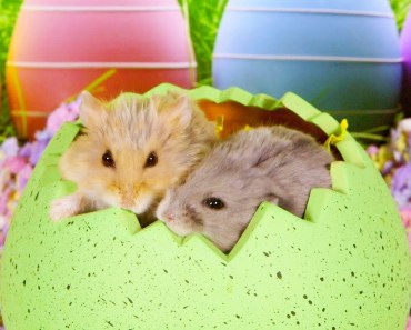 Happy Hamster Easter - happy hamster easter
