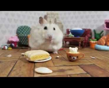 How Long Does It Take This Hamster To Eat A Pumpkin Seed (Cute Animal Vid) - how long does it take this hamster to eat a pumpkin seed cute animal vid