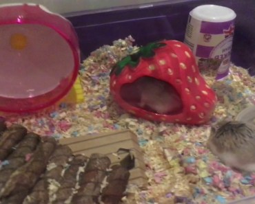 My funny hamsters - my funny hamsters