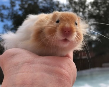 My Hamster's First Time Outside!!! - my hamsters first time outside