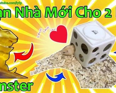 Soạn Chuồng Nơi Ở Mới Cho 2 Bé Hamster Winter White Vàng Chanh - soan chuong noi o moi cho 2 be hamster winter white vang chanh