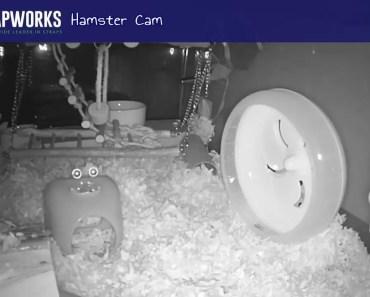 Strapworks Hamster Stream - strapworks hamster stream