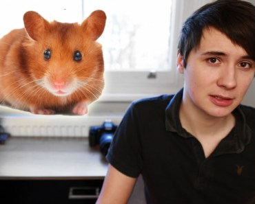 The Story of My Hamster - the story of my hamster