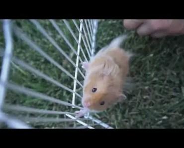 a tribute to our hamster - a tribute to our hamster