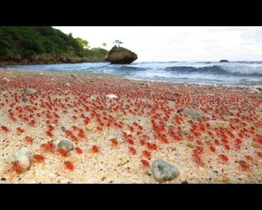 Baby Crab ARMY - Cutest Animal Videos Compilation 2018 [BEST OF] - baby crab army cutest animal videos compilation 2018 best of