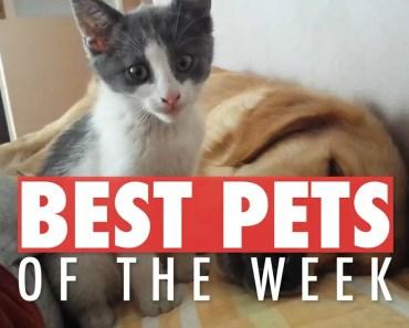 Best Pets of the Week Video Compilation| April 2018 Week 2 - best pets of the week video compilation april 2018 week 2