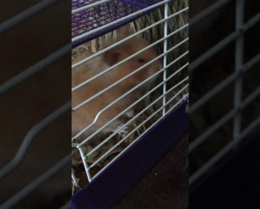 Cute funny hamster - cute funny hamster