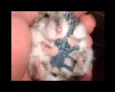 Cute Hamster Doing Funny Things | Funny Hamster Compilation # 14 - cute hamster doing funny things funny hamster compilation 14