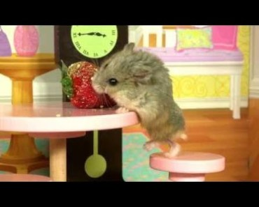 Cute Hamster Doing Funny Things | Funny Hamster Compilation # 22 - cute hamster doing funny things funny hamster compilation 22