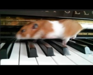Cute Hamster Doing Funny Things | Funny Hamster Compilation # 48 - cute hamster doing funny things funny hamster compilation 48