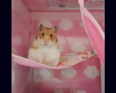 Cute hamster & funny hamster 4 - cute hamster funny hamster 4