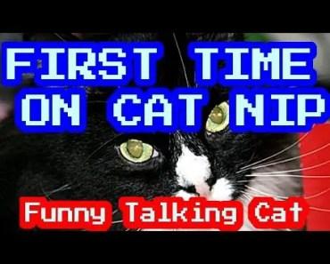 FIRST TIME CAT NIP STORY - FUNNY TALKING CAT - first time cat nip story funny talking cat