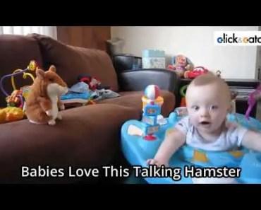 Funniest Talking Hamster Toy - funniest talking hamster toy