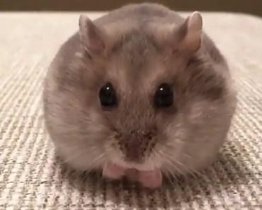 Funny animals 2018|funny videos - funny animals 2018funny videos