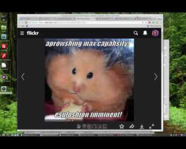 Funny Hamsters, Care, Cages and Supplies - funny hamsters care cages and supplies