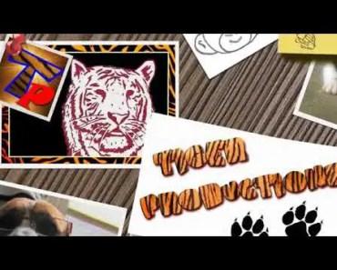 Funny pets cat's,Dog's,Hamster - funny pets catsdogshamster