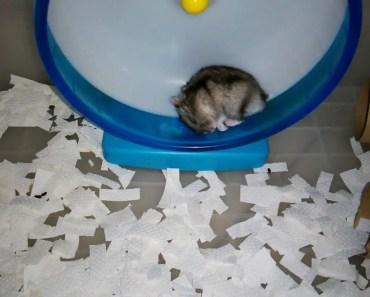 Funny sleepy hamster on the wheel. - funny sleepy hamster on the wheel