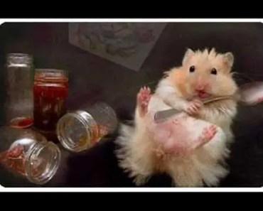 Good Hamster Names - good hamster names