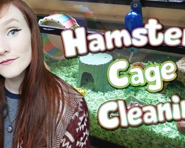 Hamster Cage Cleaning | My Robrovski Hamster - hamster cage cleaning my robrovski hamster