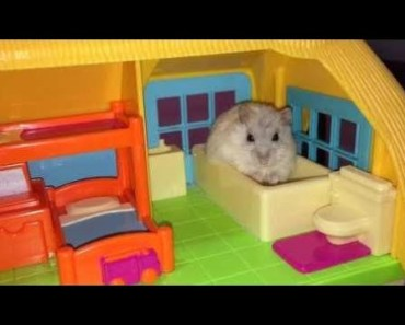 Hamster | Hamster Cage Tour | Cute Hamster Doing Funny Things Part 2 - hamster hamster cage tour cute hamster doing funny things part 2