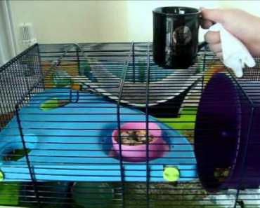 How to stop your hamster to bitting it's own cage - how to stop your hamster to bitting its own cage