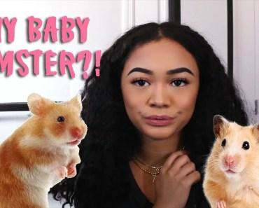 I got a 3 week old Hamster?! - i got a 3 week old hamster