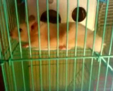 I need HELP! My hamster is acting strange sometimes =( - i need help my hamster is acting strange sometimes