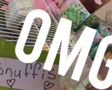 Köper en hamster | Kort vlogg typ - koper en hamster kort vlogg typ
