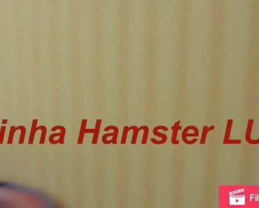 Minha Hamster LUA - minha hamster lua