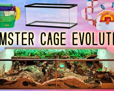 My Hamster Cage Evolution & Progression Through the Years - my hamster cage evolution progression through the years