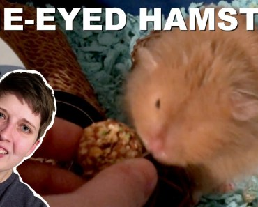 ONE-EYED HAMSTER CAGE TOUR - one eyed hamster cage tour
