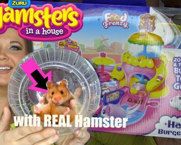 Real Hamsters in a house vs Fake Toys Hamsters in a house BY Zuru Hamster playing eating and mansion - real hamsters in a house vs fake toys hamsters in a house by zuru hamster playing eating and mansion