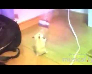 TINY HAMSTER DANCIN WITH WATER BOTTLE - tiny hamster dancin with water bottle