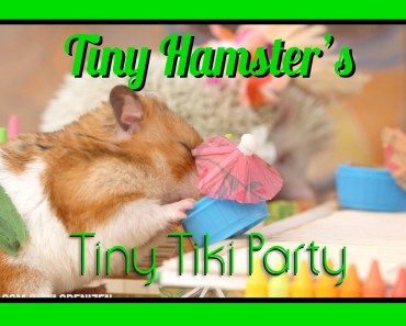 Tiny Hamster's Tiny Tiki Party (Ep. 6) - tiny hamsters tiny tiki party ep 6