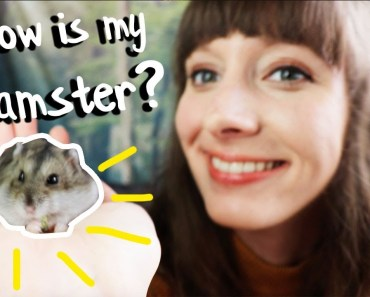 Updates on my Job, Hamster, Plants and Life! - updates on my job hamster plants and life