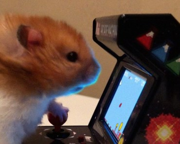 Video Game Hamster Preview - The Talking Hamster - video game hamster preview the talking hamster
