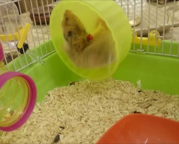 Funny Hamster - 1525916339 funny hamster