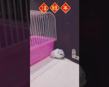 funny animals video clips - 1525931511 funny animals video clips