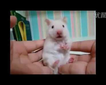 FUNNY reaction of the mouse when he eats hot pepper - 1527333244 funny reaction of the mouse when he eats hot pepper